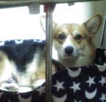 犬の十戒って知っていますか?「犬と私の10の約束」の内容とは?