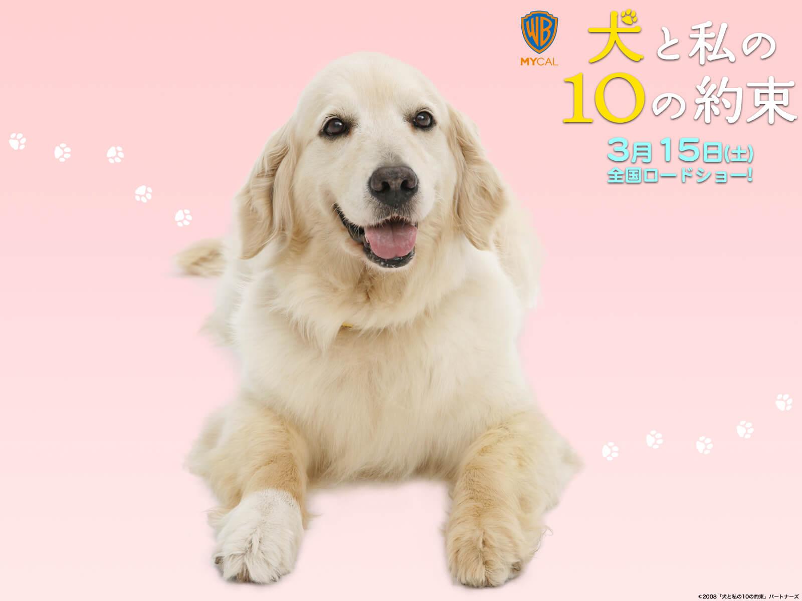 犬の十戒ポスター 成犬 ゴールデンレトリバー