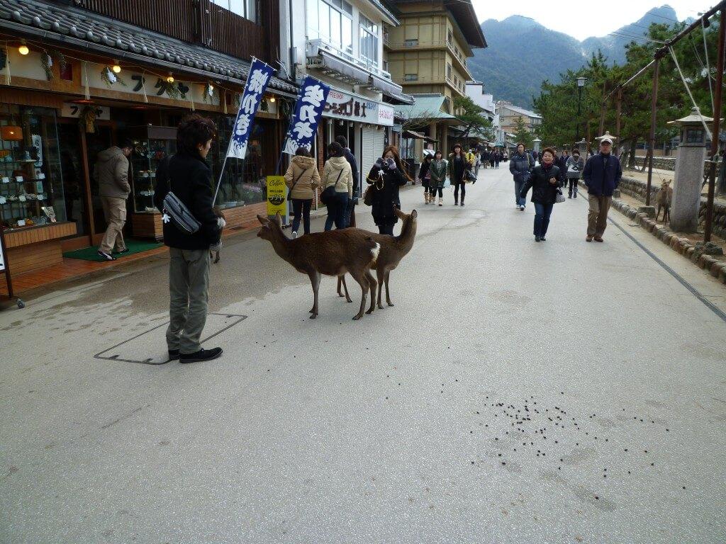 宮島へ!広島が誇る世界遺産厳島神社観光!野良鹿がいるんですね(笑)