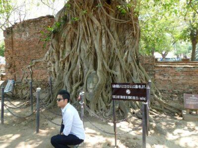 アユタヤ 大仏 木に埋まっている