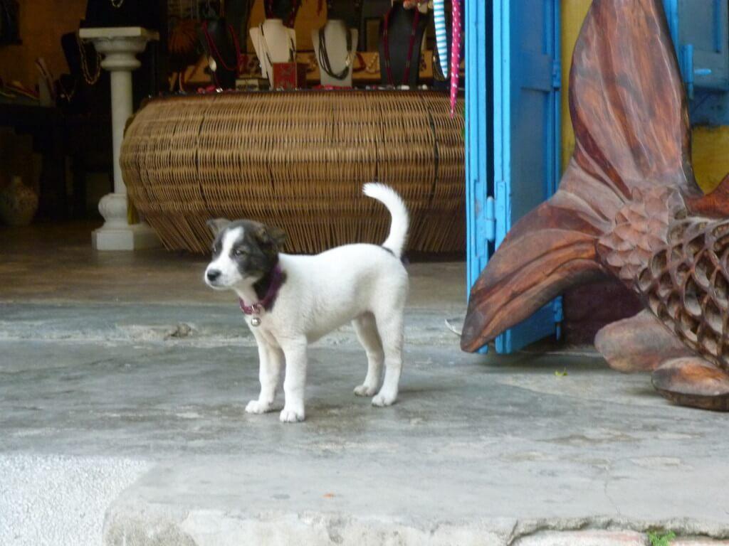 ホイアン 犬
