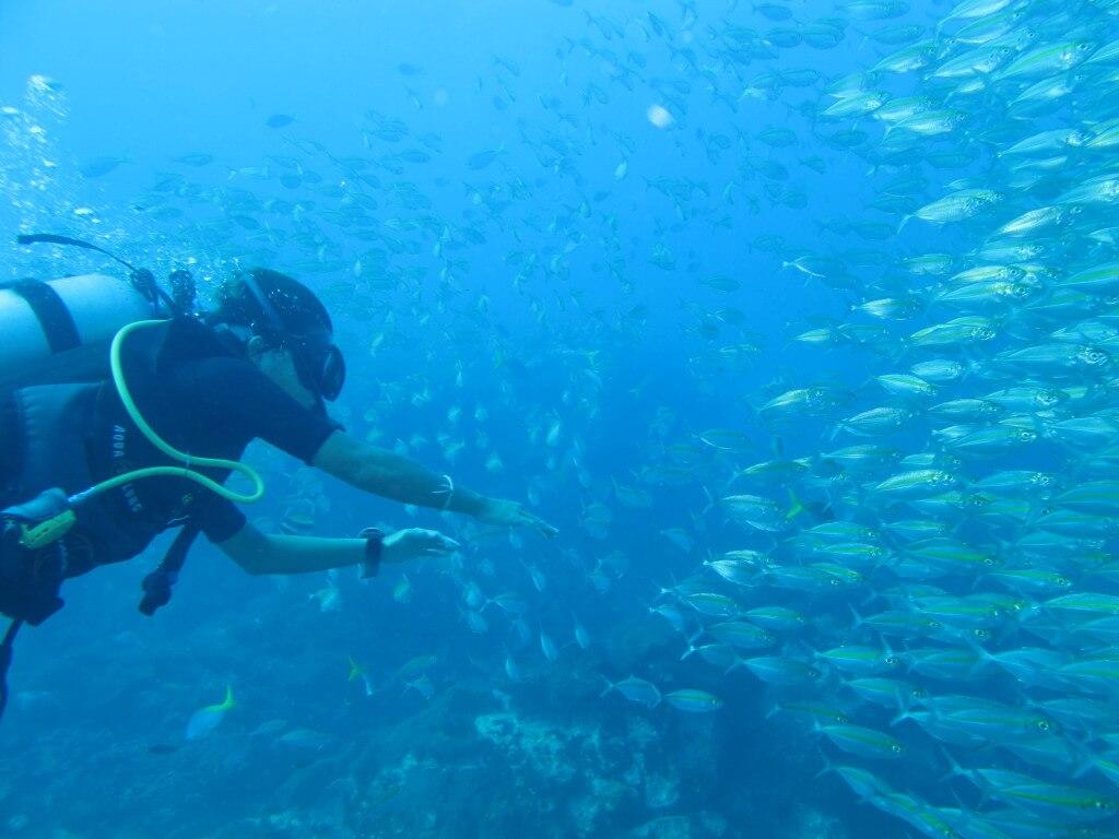 タオ島 ダイビング 魚群