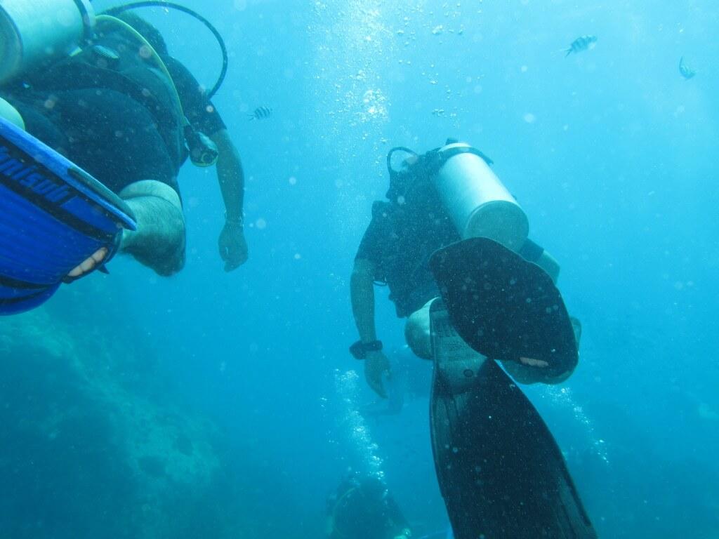 ダイビング タオ島