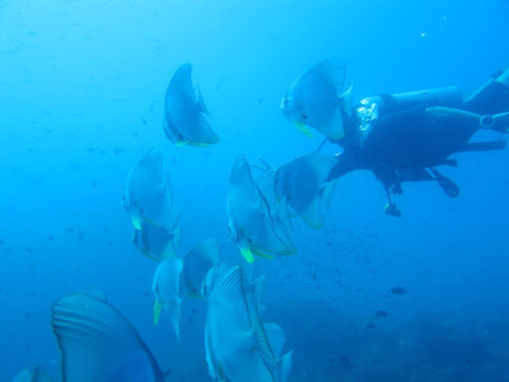ダイビング タオ島 オープンウォーターライセンス