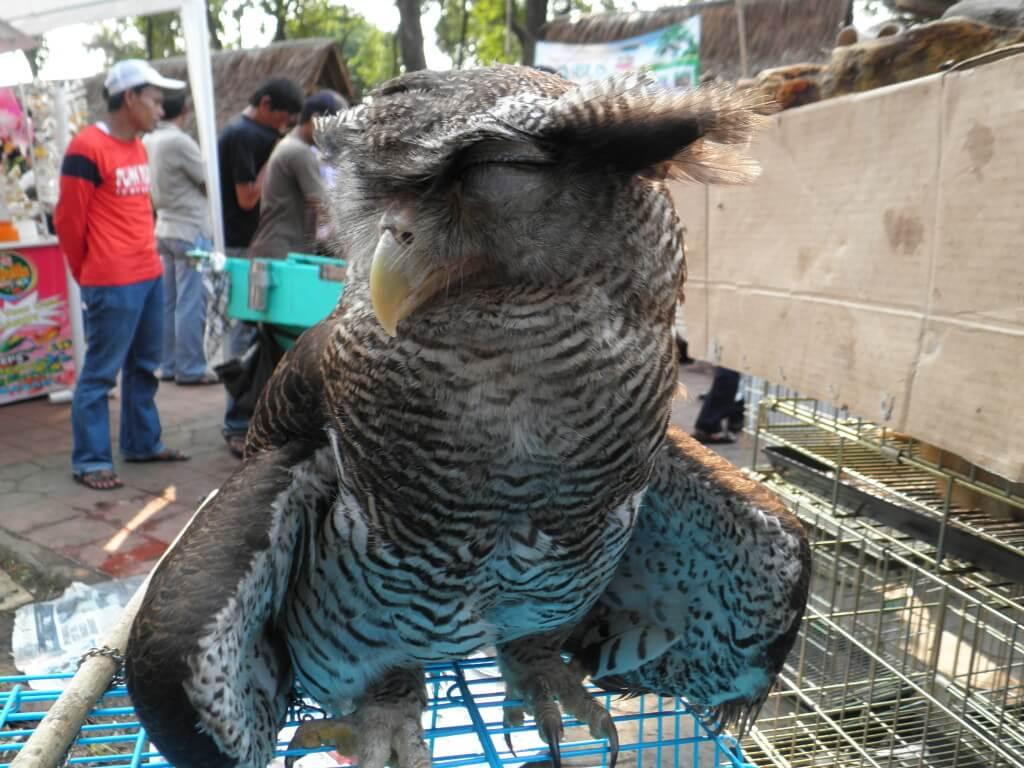 動植物園 インドネシア ふくろう