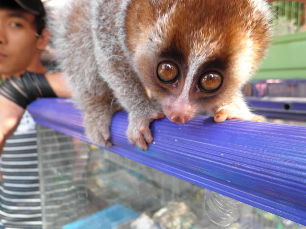 動植物園 インドネシア サル