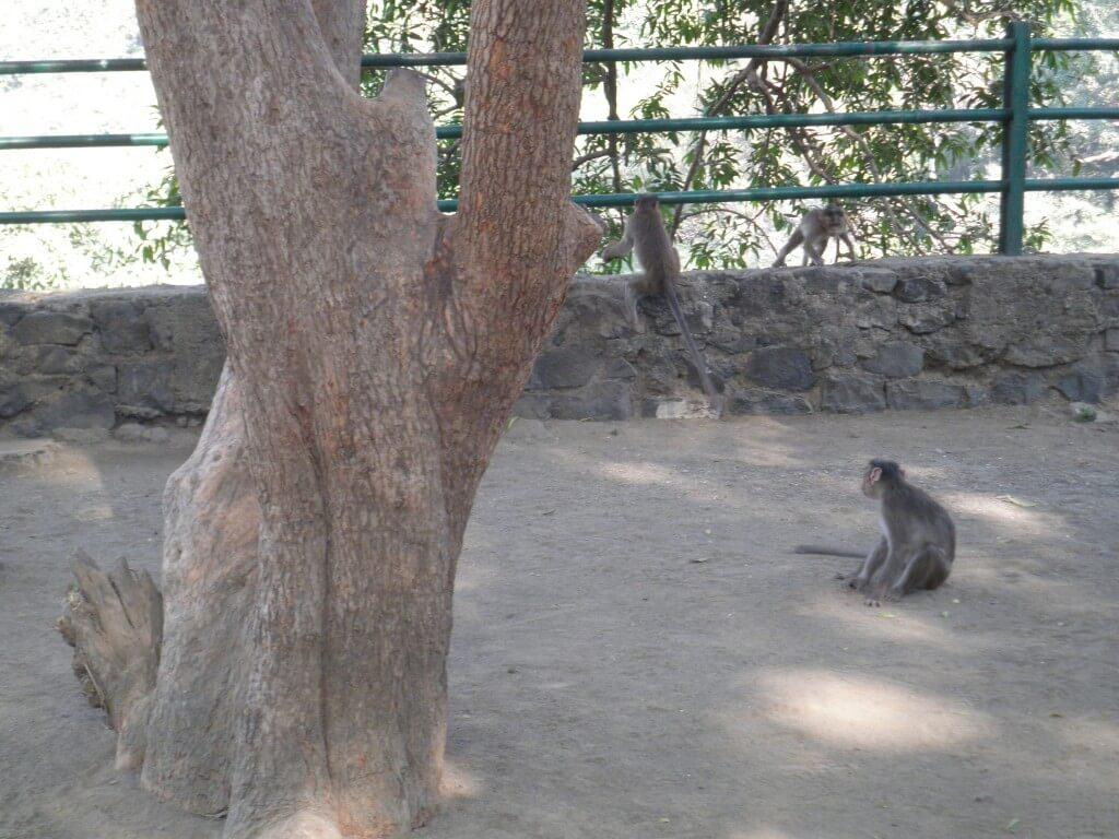 サル 狂犬病 インド