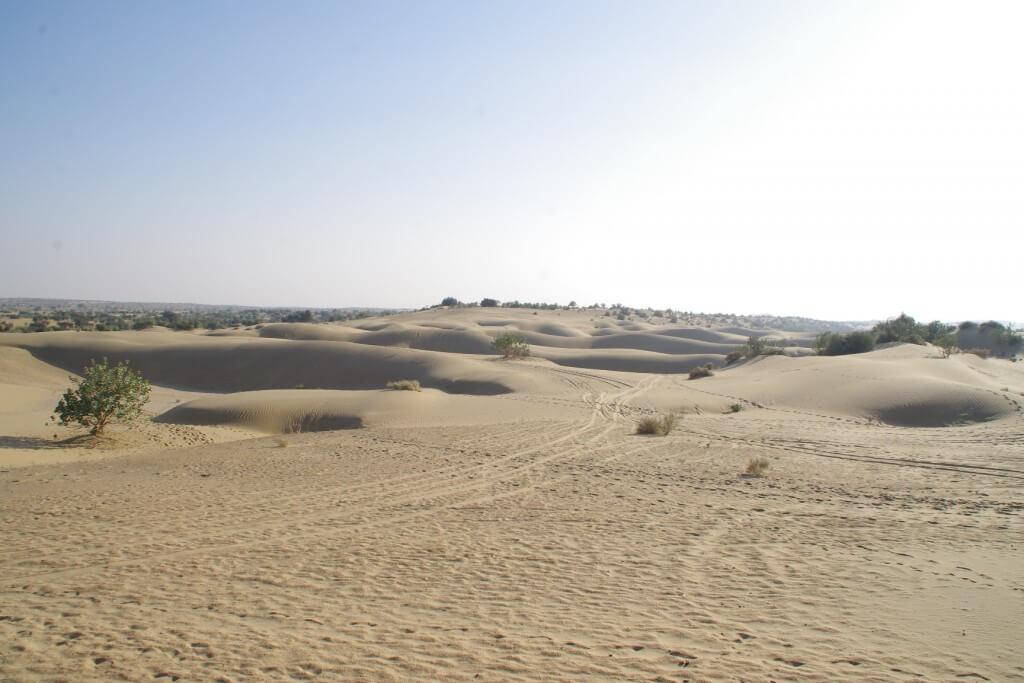キャメルサファリ タール砂漠 植物
