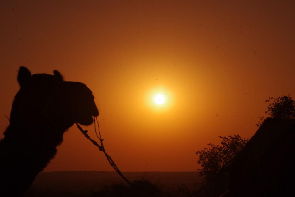 キャメルサファリ 砂漠 サンセット 夕日
