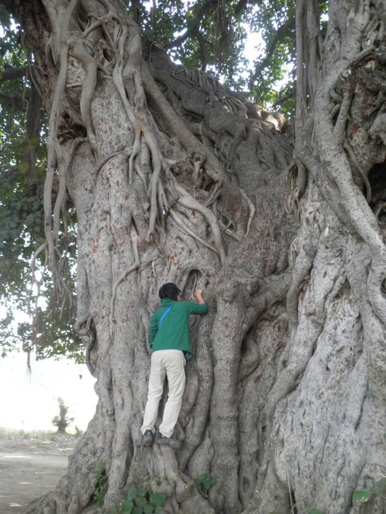 ブッダ 行き倒れた木
