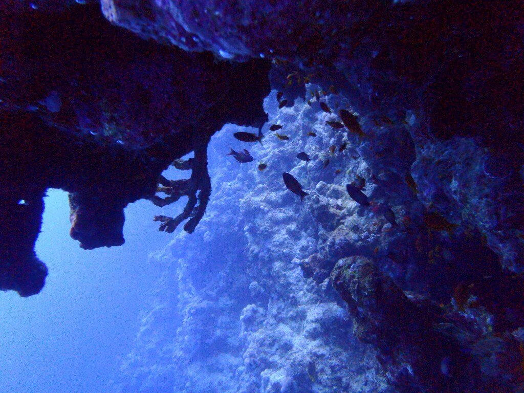 ダハブ ブルーホール 魚