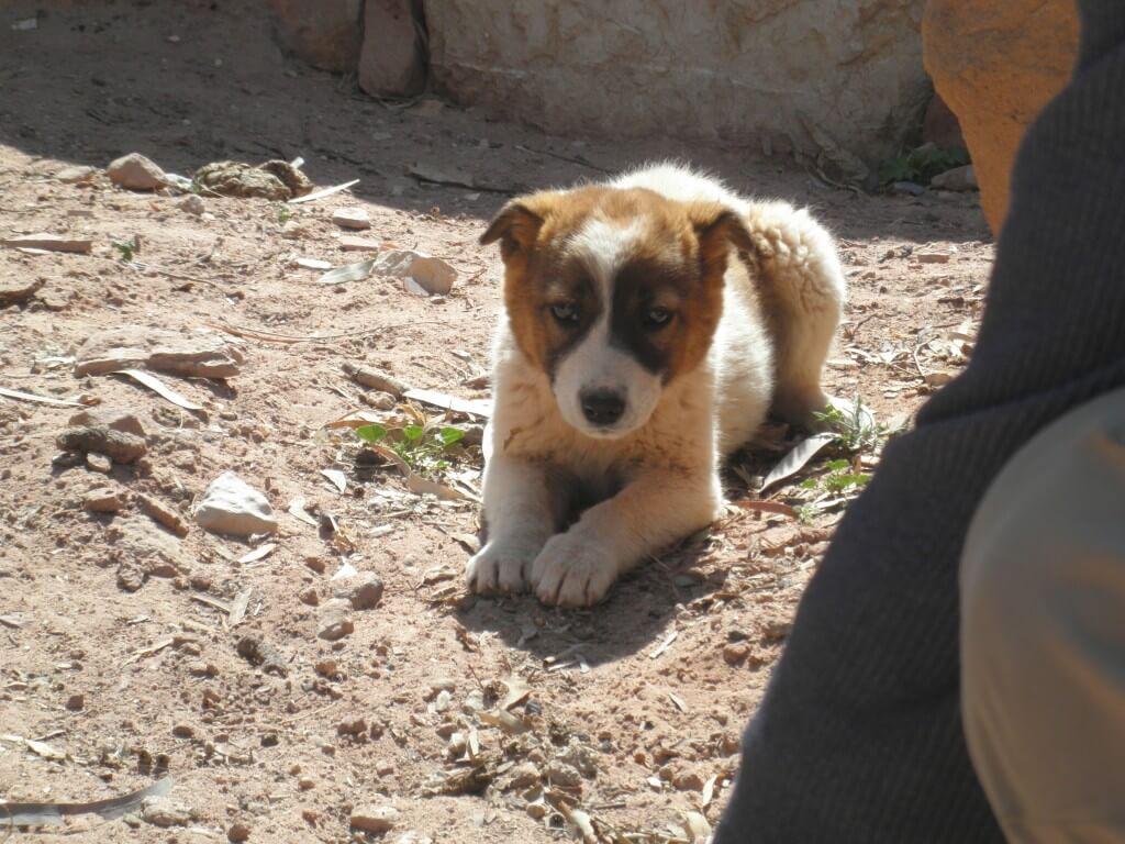 ペトラ遺跡 犬