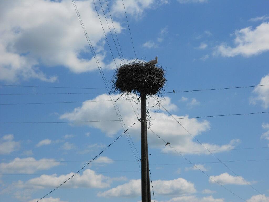 ジトミール コウノトリの巣 ウクライナ