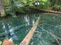プリトヴィツェ国立公園 自然保護区 沈んだ木 透き通るエメラルドグリーンの湖