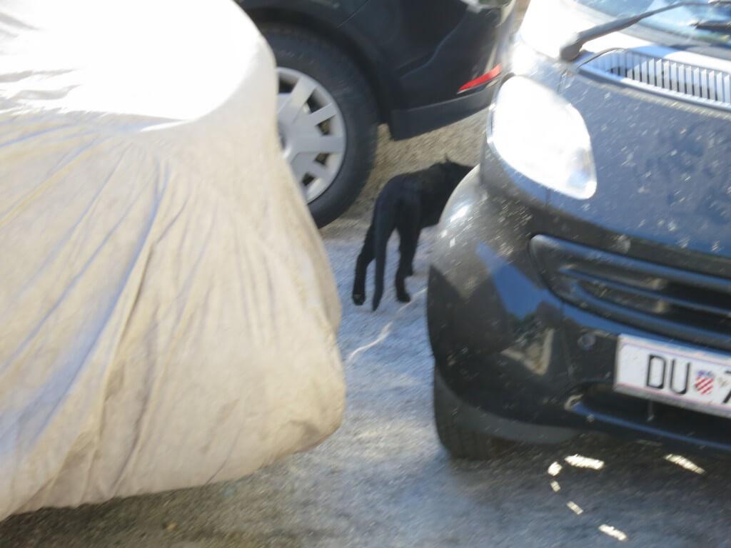 その時!!ついにここ ドブロブニクで魔女の宅急便の黒猫 ジジ 発見!?