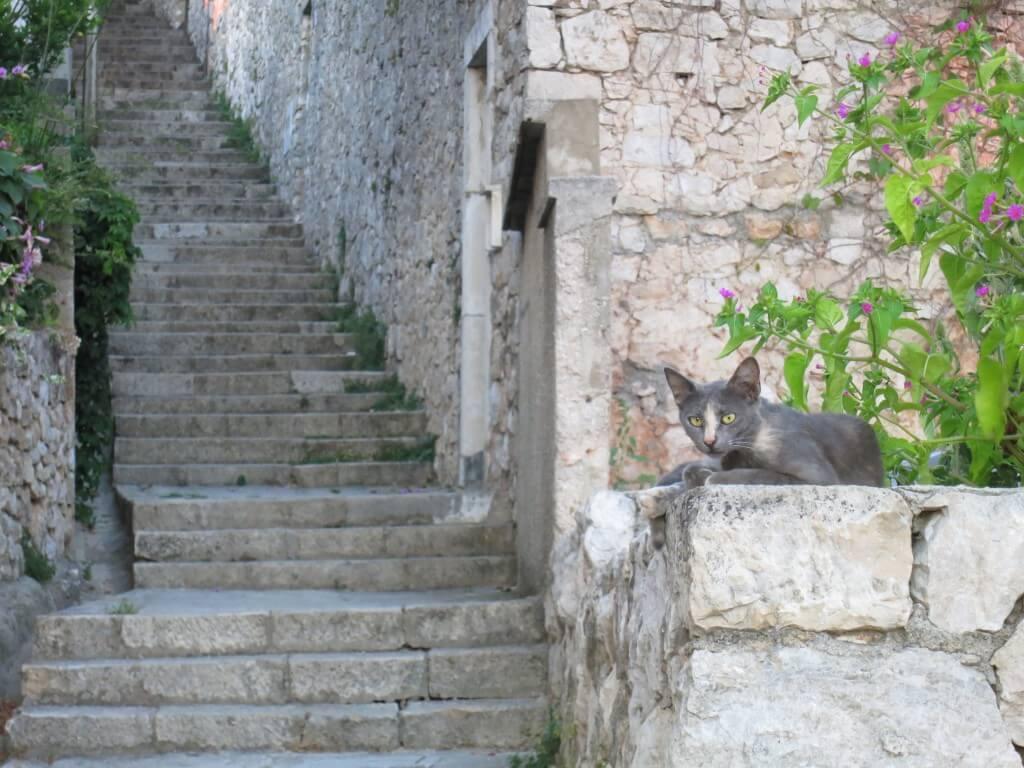 ドブロブニクの街には「黒猫=ジジ」が多い クロアチア