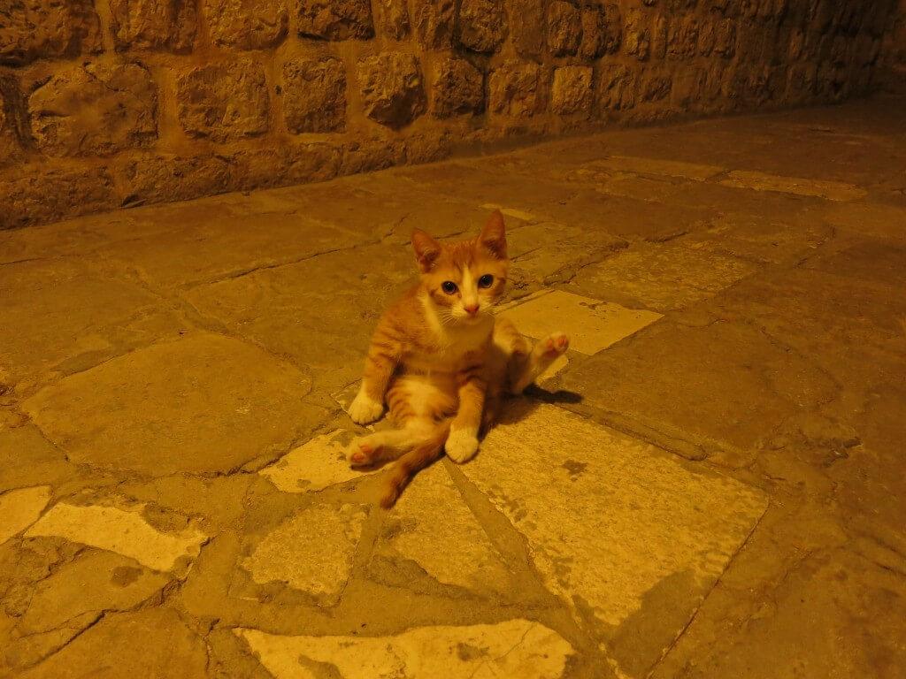 ドブロブニク 旧市街 めっちゃかわいい子猫 クロアチア