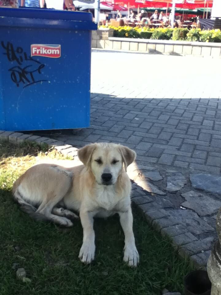 オフリド 犬