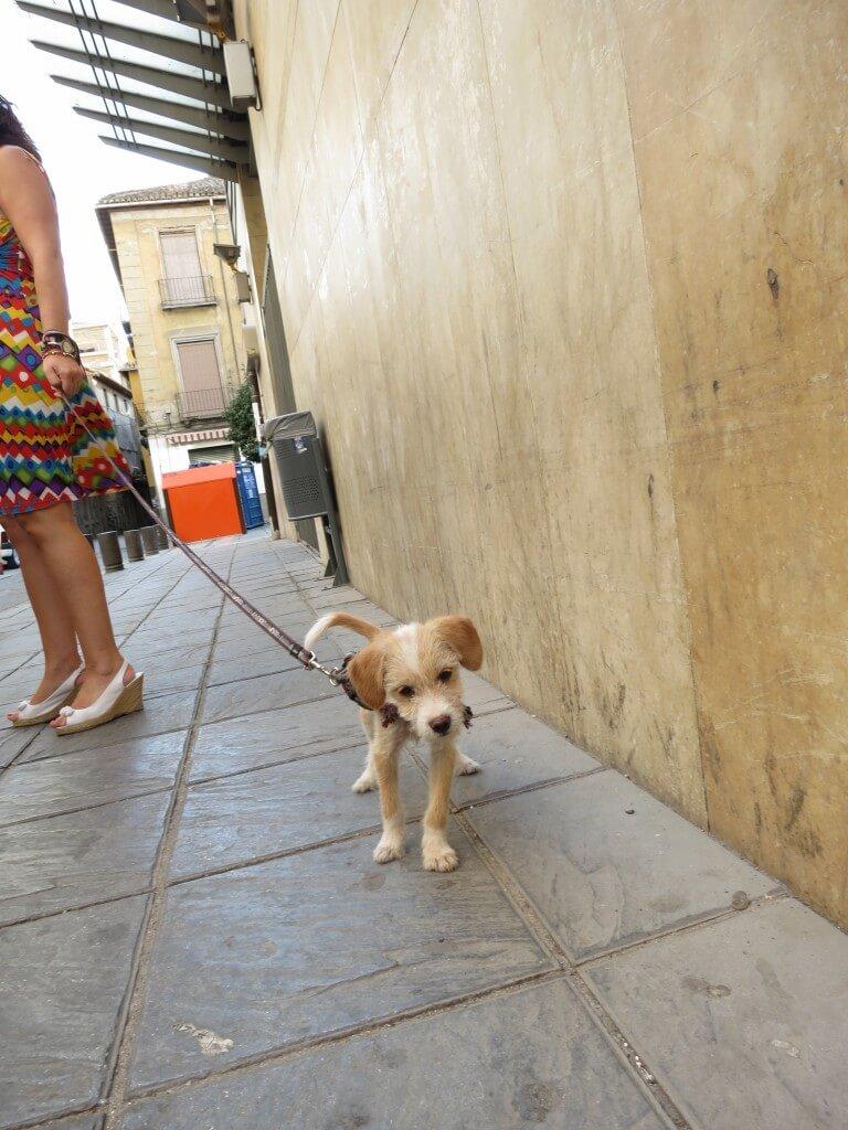 グラナダ 犬 ネコ かわいい