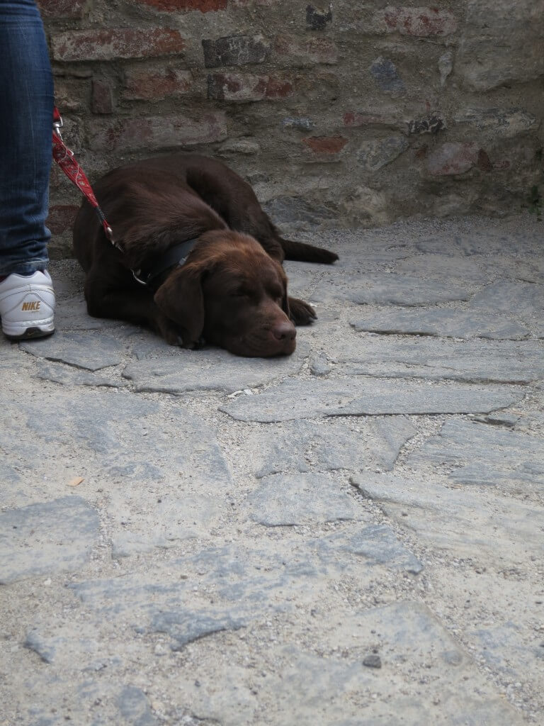 チェスキー・クルムロフ 犬 散歩 かわいい チェコ