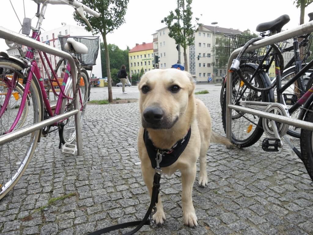 世界平和 イヌ 犬 ベルリン ドイツ