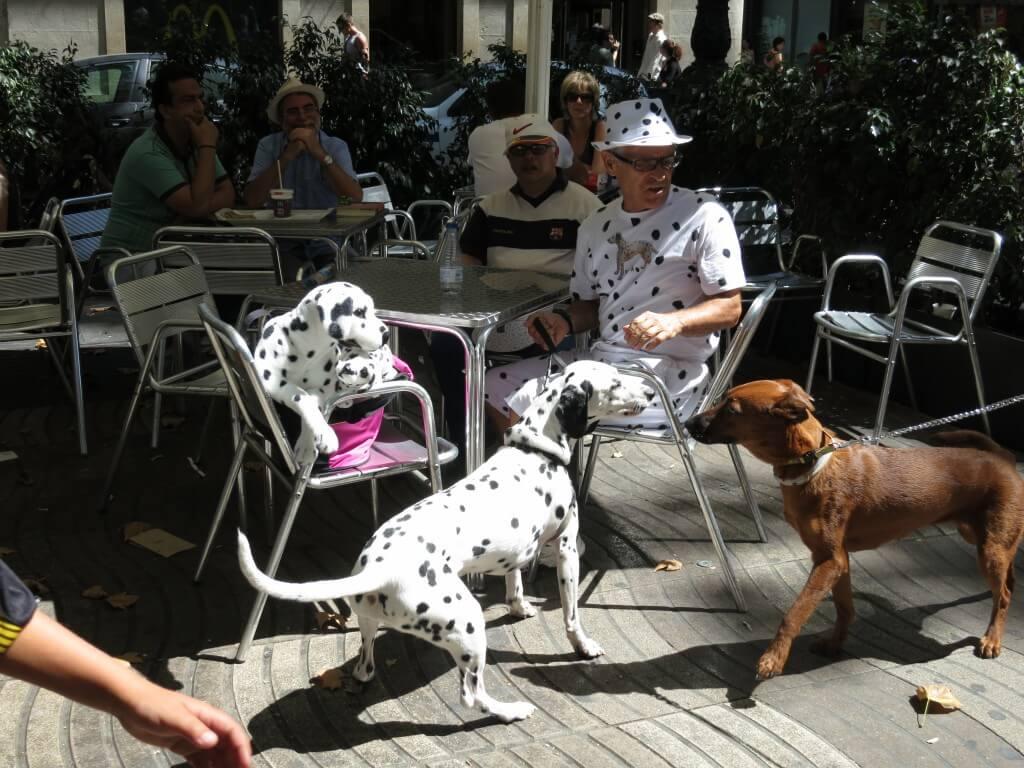 バルセロナ 犬おじさん スペイン