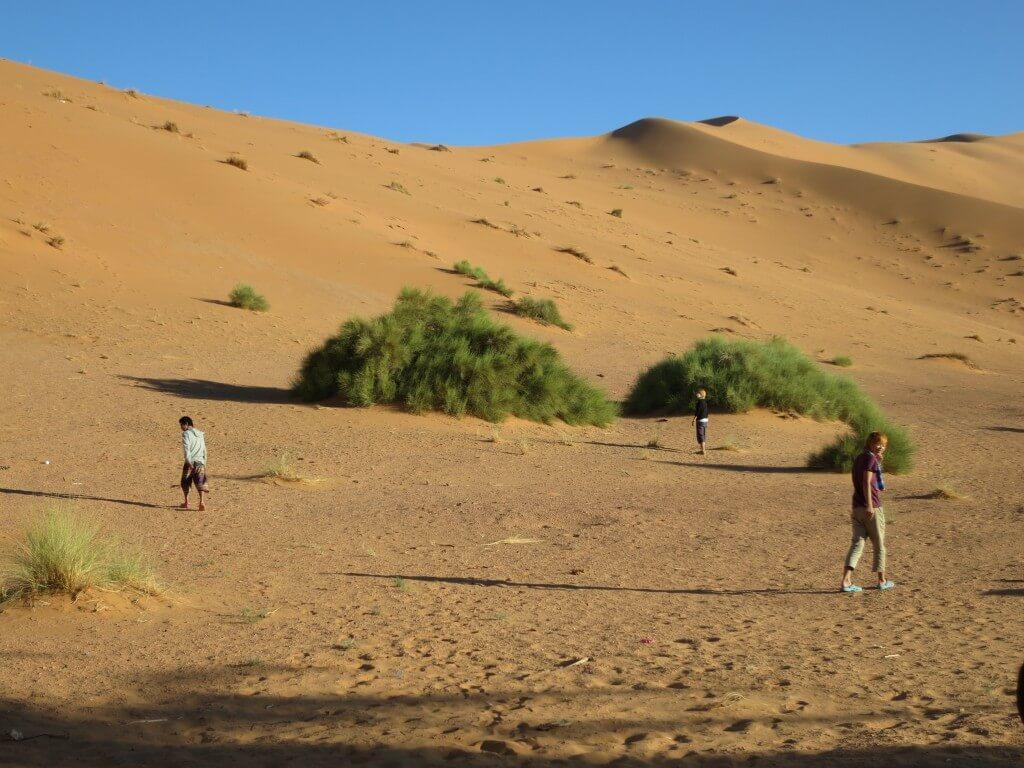サハラ砂漠 トイレ 野生 モロッコ