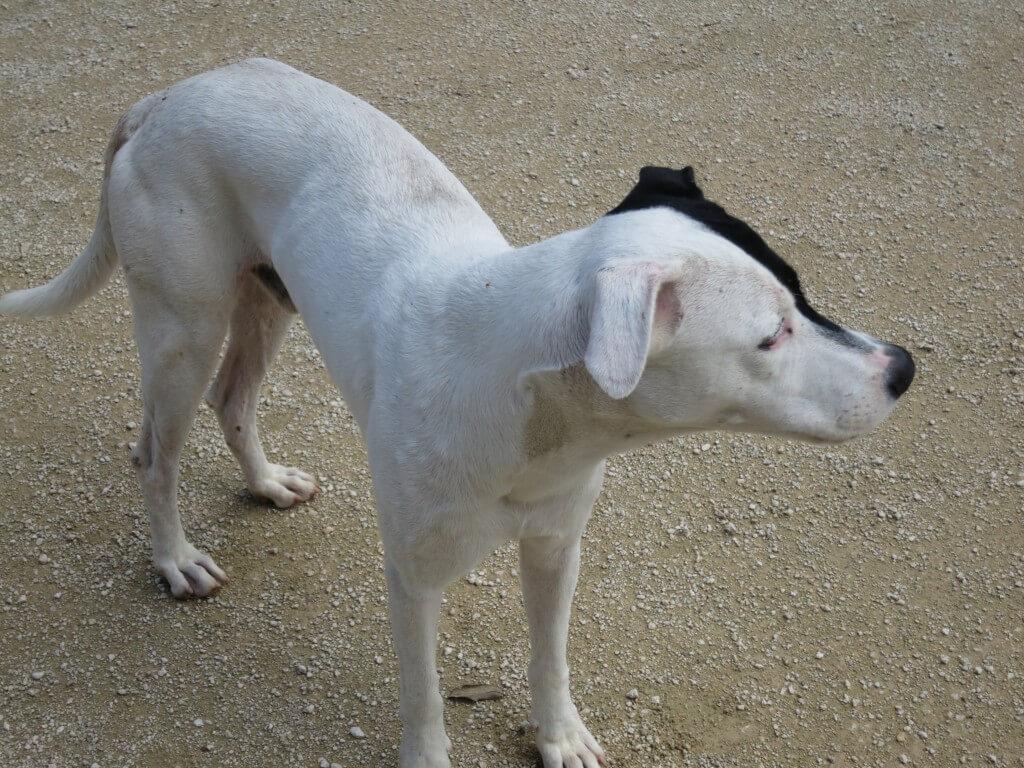 セノーテ Kukulkan(ククルカン) 犬 メキシコ