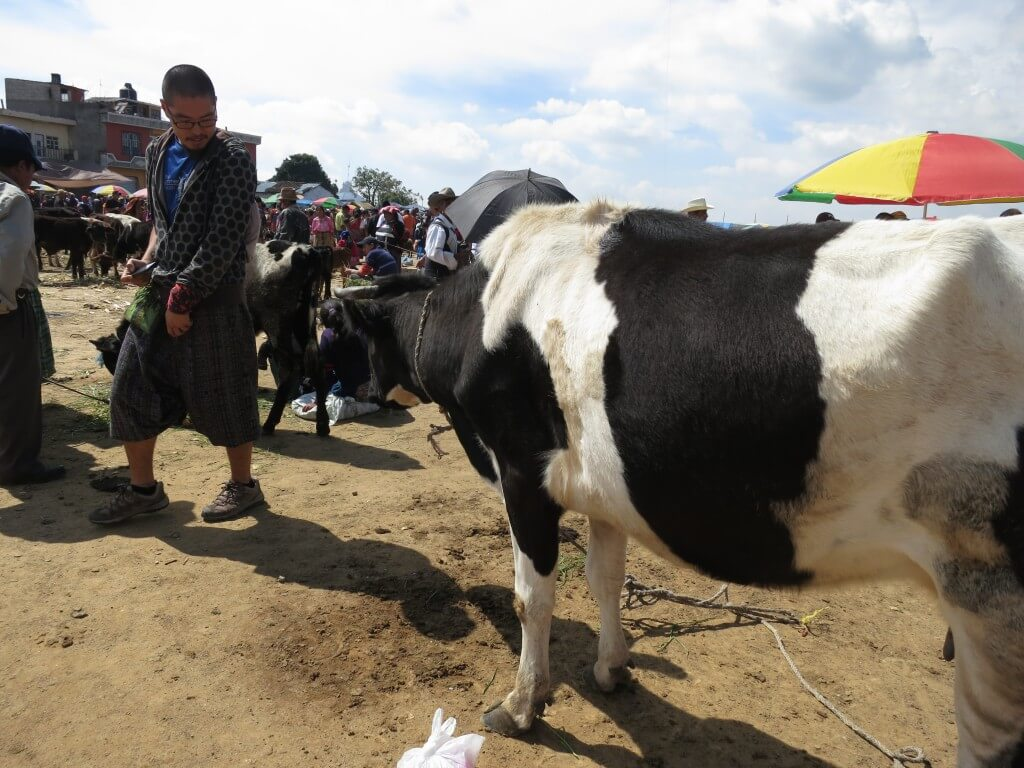 サン・フランシスコ村 メルカド 牛 グアテマラ