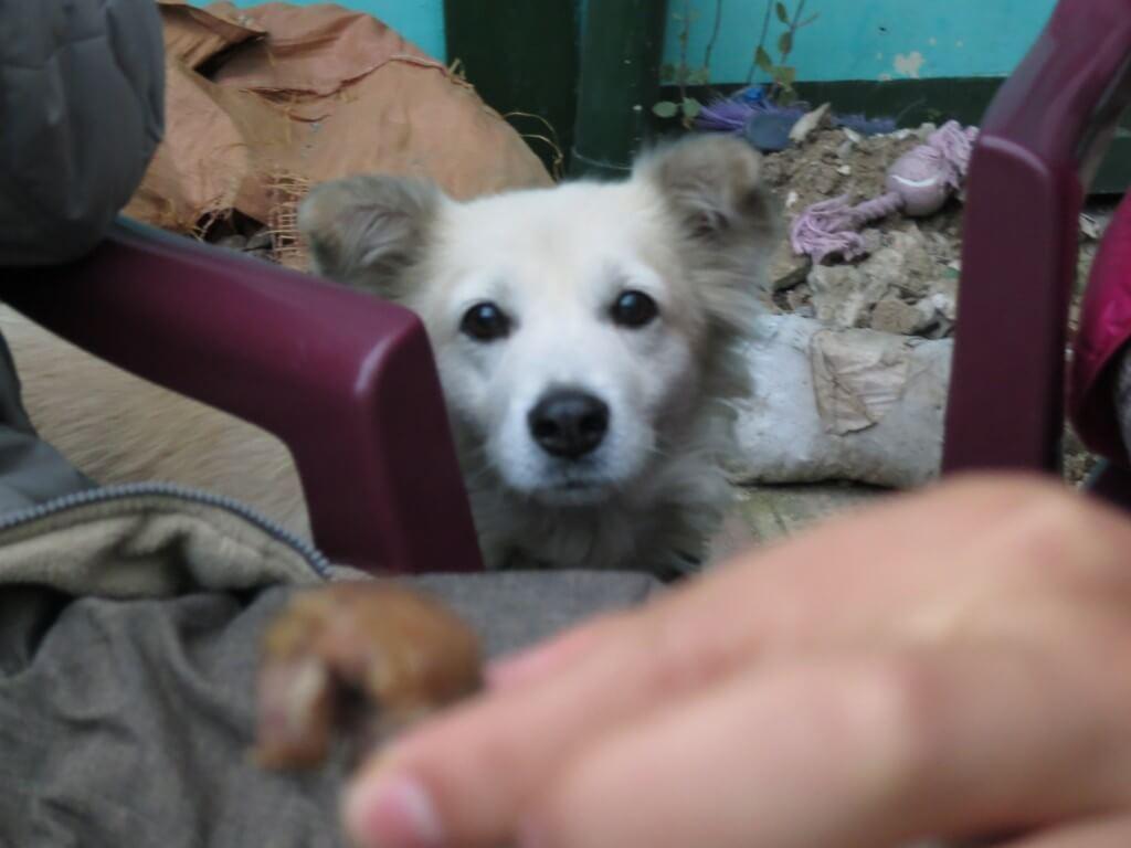 タカハウスのマスコット犬 ボビーは慣れればめっちゃかわいいの♪