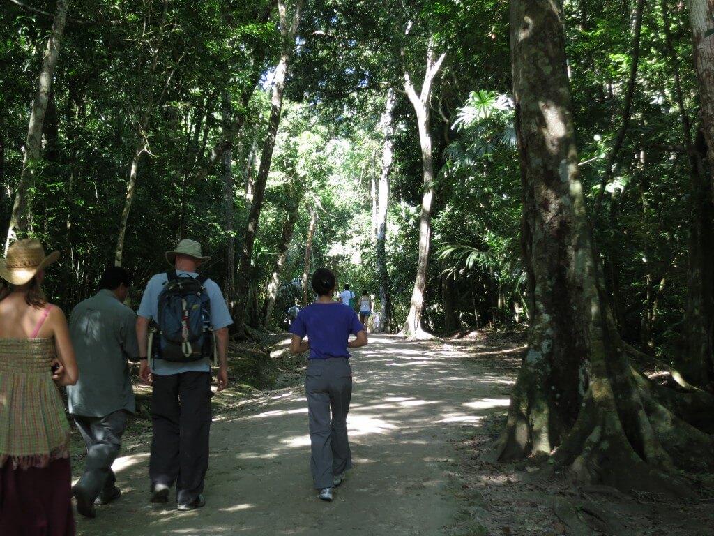 ティカル遺跡はジャングルの中を歩くぞ!それは危険動物も!?