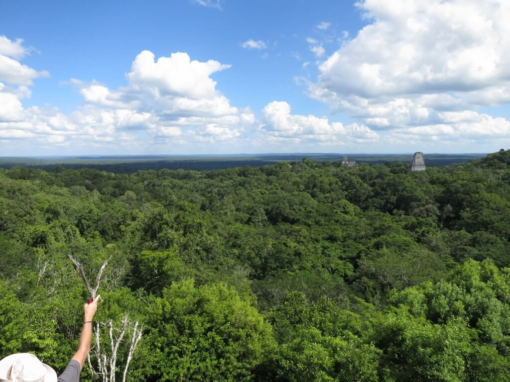 4号神殿 ティカル遺跡 景色 ジャングル一帯 絶景 グアテマラ