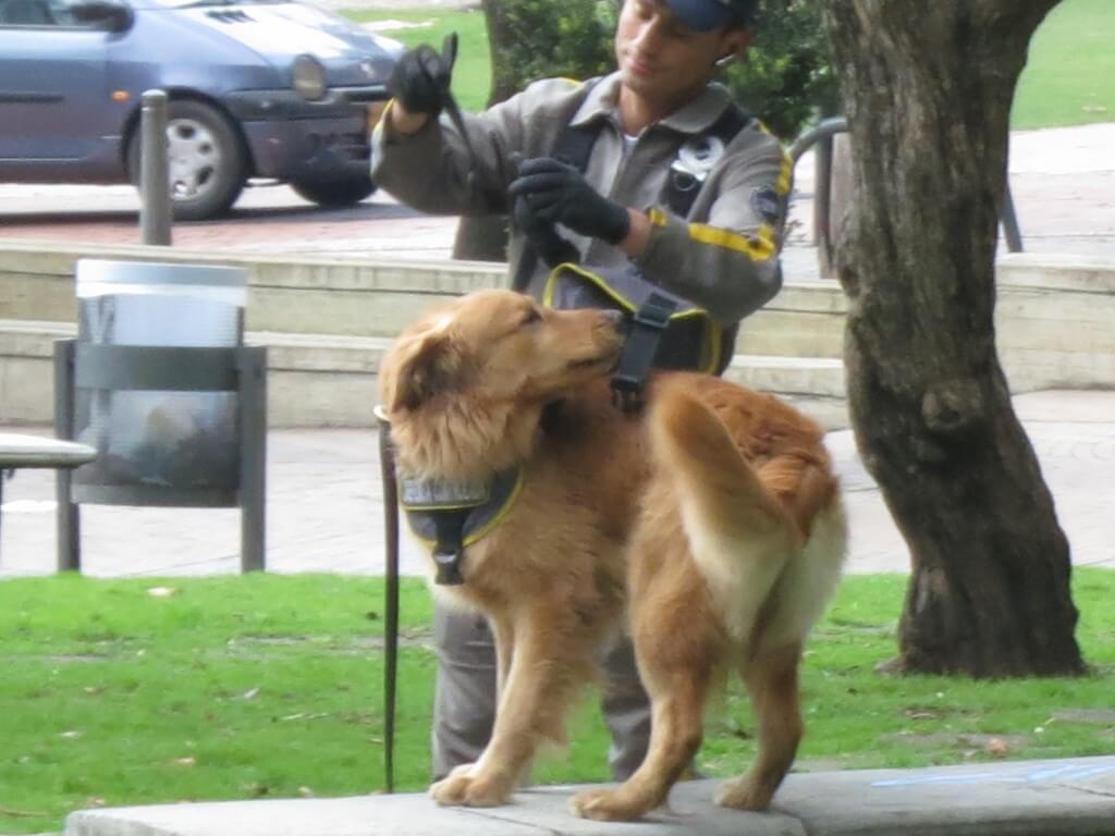モンセラーテの丘のケーブルカー、ロープウェイ乗り場へ!警察犬が!!
