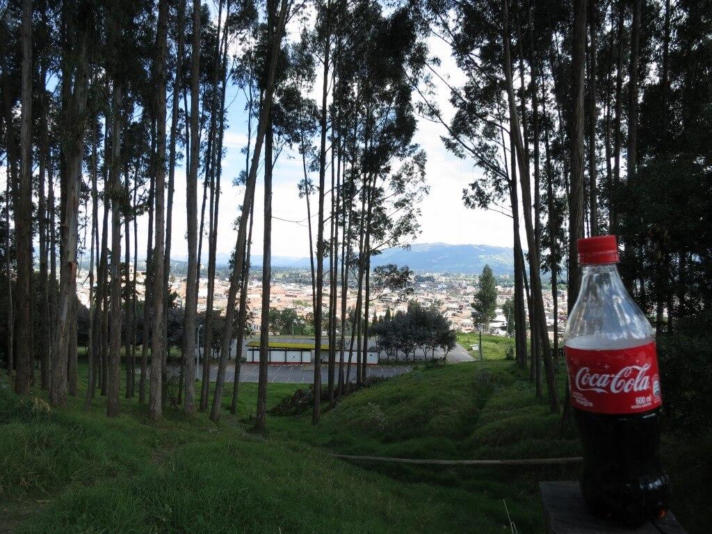 今日のコーラ 杉ってコロンビアにもあるんだ・・・