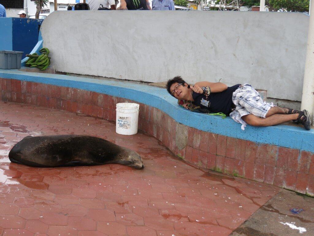 ガラパゴスアシカ サンタ・クルス島 プエルト・アヨラ ガラパゴス諸島 エクアドル