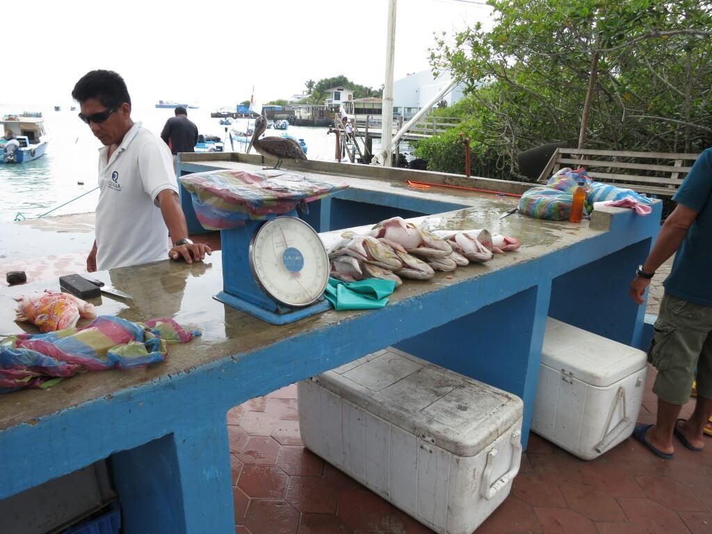 ガラパゴス諸島の魚市場ではめっちゃ格安で魚をGETできる!!!
