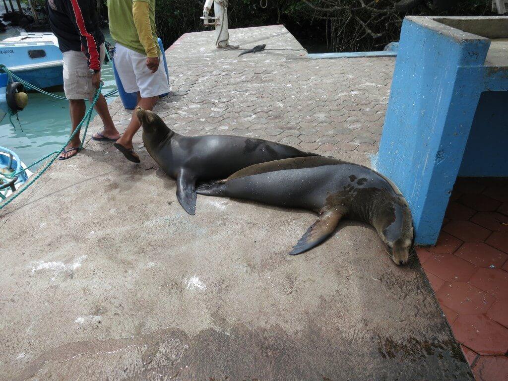 プエルト・アヨラの魚市場で繰り広げられる動物達の仁義なき戦いの面子は?