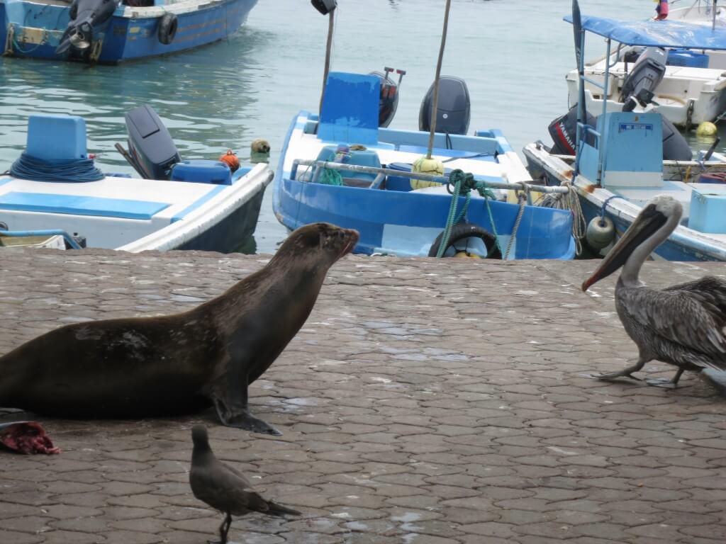マグロが格安!?サンタ・クルス島で仁義なきの魚市場の戦い!