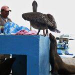 プエルトアヨラの魚市場ではマグロが格安!?ガラパゴス諸島の動物たちも必見です