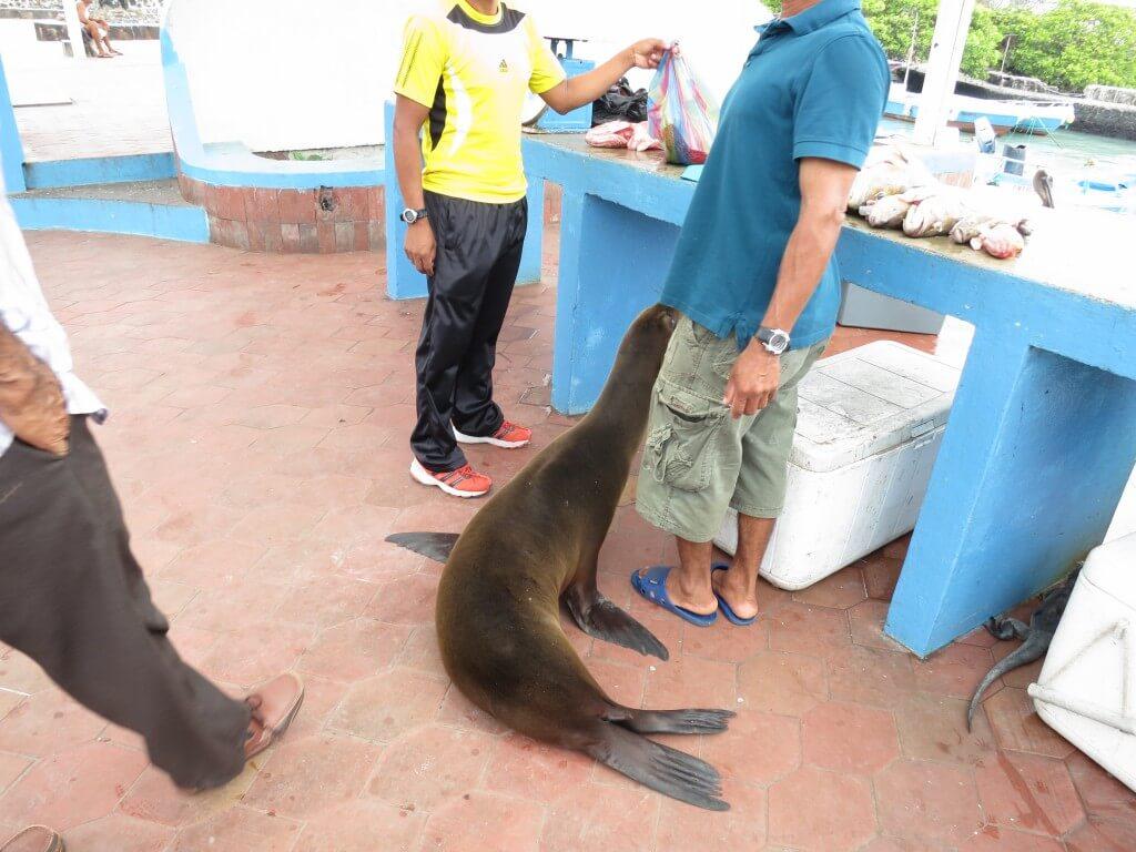 だがプエルト・アヨラの魚市場では甘えたモノが制す!?