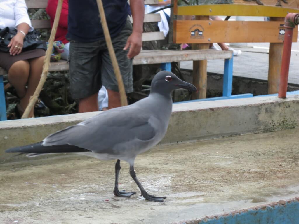 世界遺産ガラパゴス島の生態系を守りながら観光しましょう!