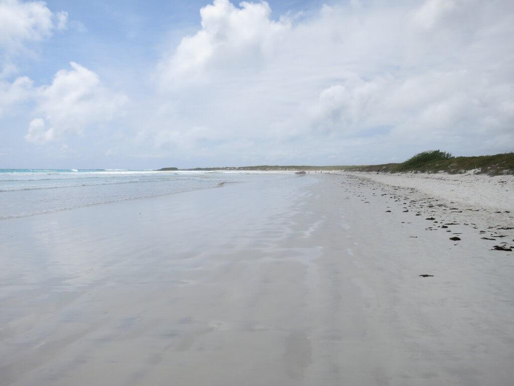 Galapagos Beach at Tortuga Bay(ガラパゴスビーチ トルトゥーガ・ベイ) プエルト・アヨラ サンタ・クルス島 ガラパゴス諸島