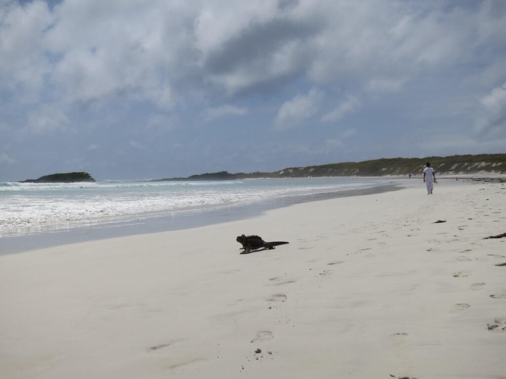 ガラパゴスウミイグアナ 鳥 Galapagos Beach at Tortuga Bay(ガラパゴスビーチ トルトゥーガ・ベイ) プエルト・アヨラ サンタ・クルス島 ガラパゴス諸島