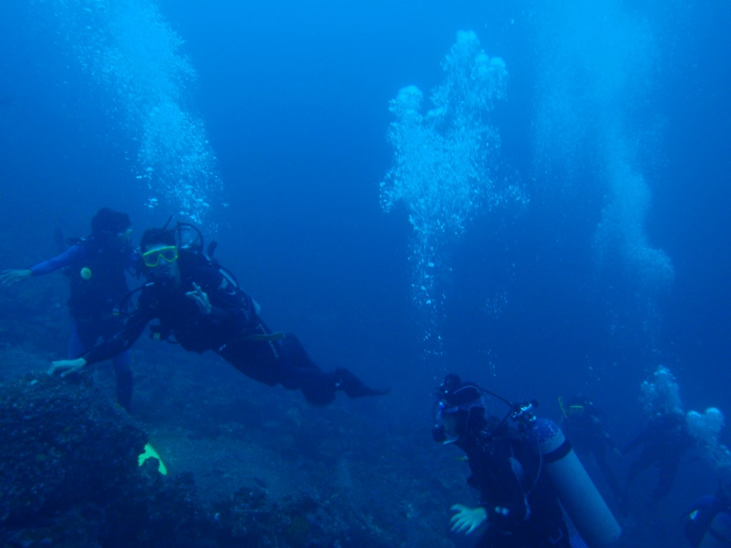 ゴードンロックダイビング1本目 潜行、集合、視界悪い・・・。でも数分後・・・ボクらは出会ったハンマーヘッドシャーク!!
