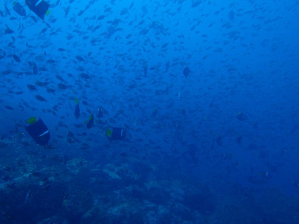 ウミガメ ゴードンロック ハンマーヘッドシャーク ガラパゴスザメ サンタ・クルス島 ガラパゴス諸島