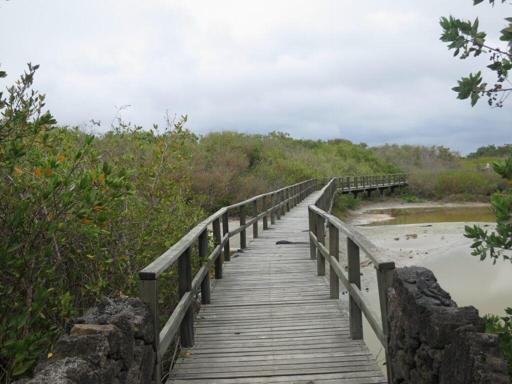 イサベラ島のゾウガメのBreeding Centerへの道は・・・自然動物&植物王国!!
