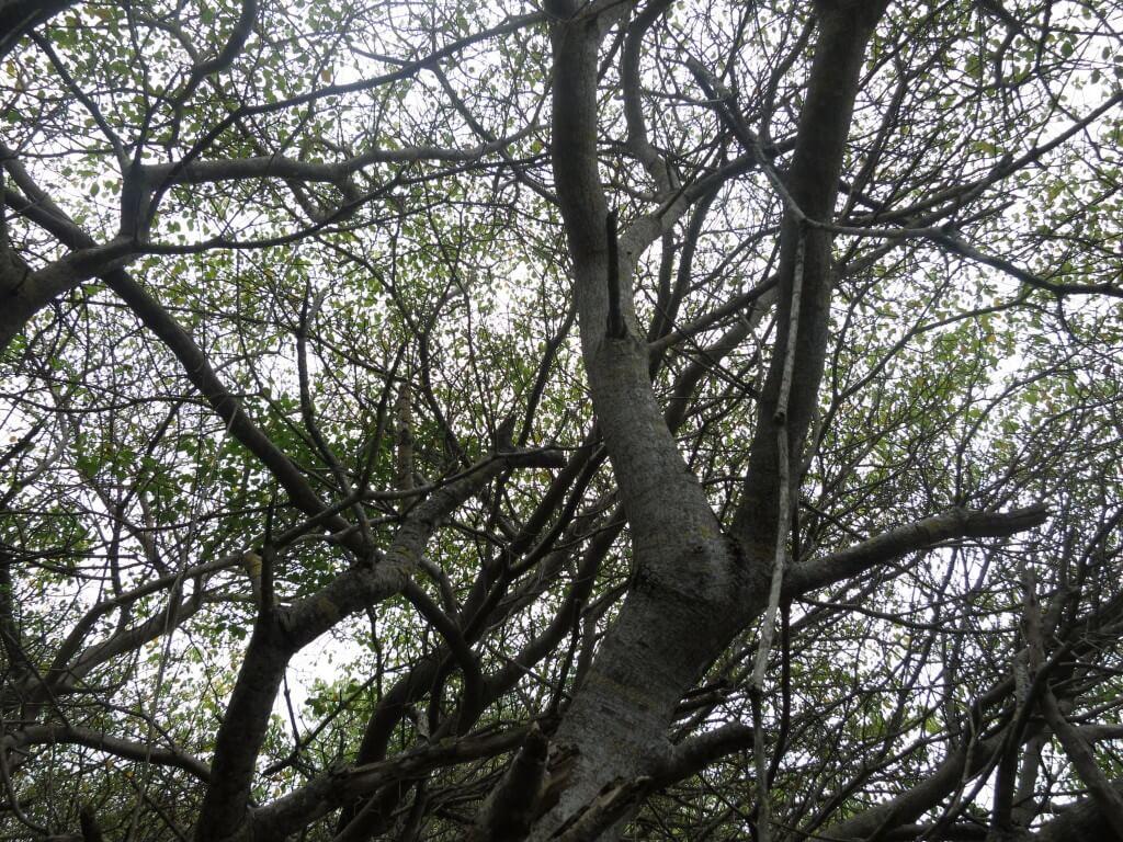 フラミンゴだけではないぞ!!自然の毒りんごまであるのがガラパゴス諸島のイサベラ島!あれ?白雪姫!?