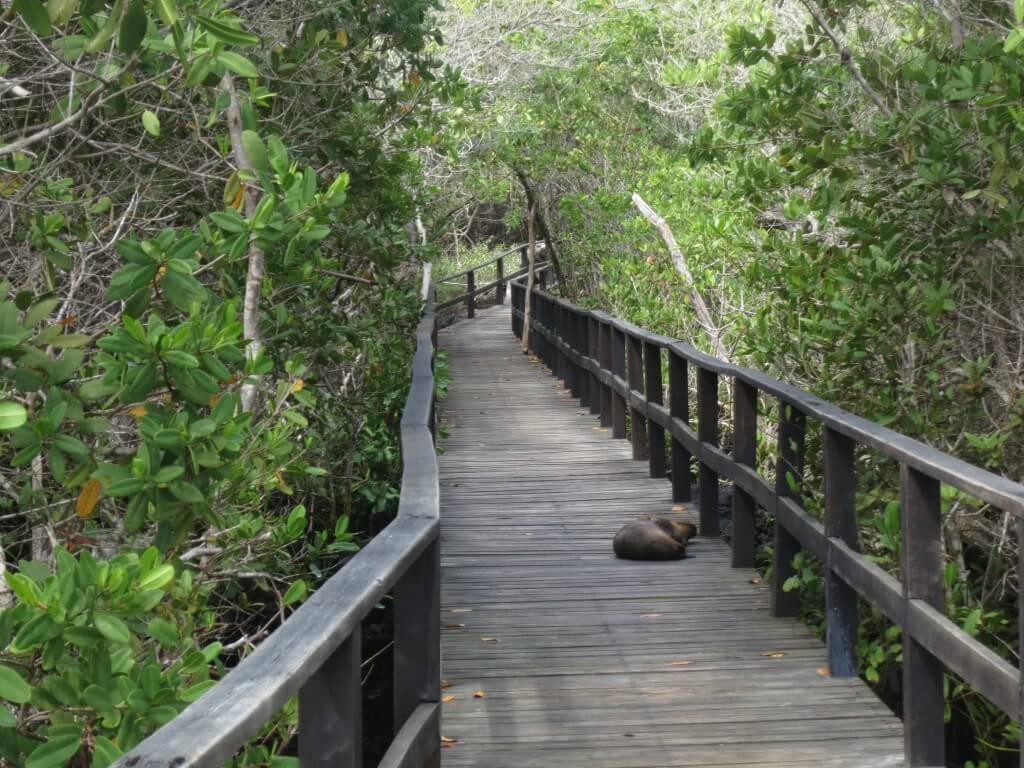 イサベラ島 concha de perla ガラパゴス諸島