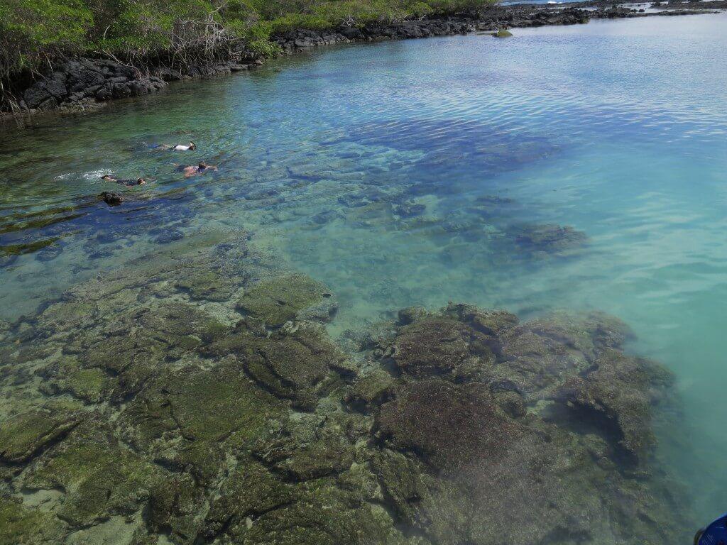 「concha de perla」は引き潮の時間帯なら透き通った絶好のシュノーケリングポイント!