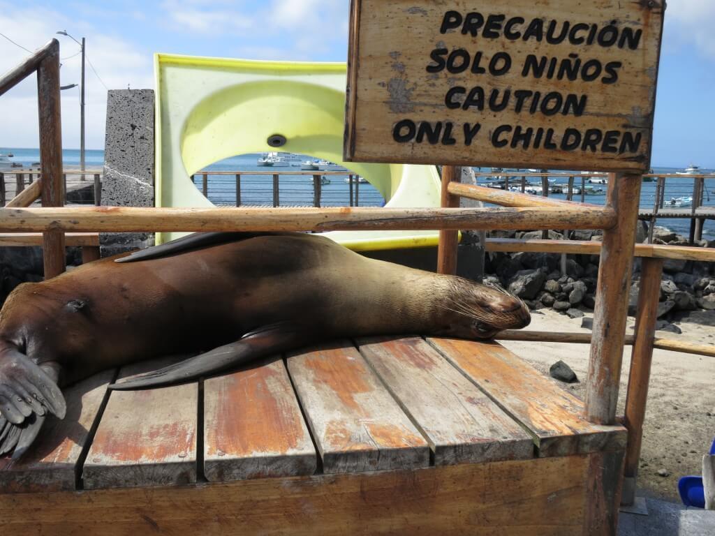 アシカ サン・クリストバル島 寝ている ガラパゴス諸島